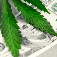 Investigators Uncover Marijuana Production Facility in Aberdeen